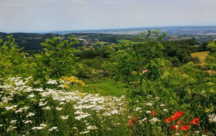 Balade moto monts du Lyonnais en fleurs